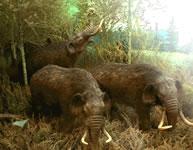 opera admastodons